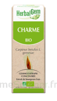 Herbalgem Charme Macérat bio 30ml à SAINT-VALLIER