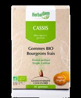 Herbalgem Gomme cassis bio B/24 à SAINT-VALLIER